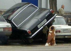 Crazy-Car-Parking